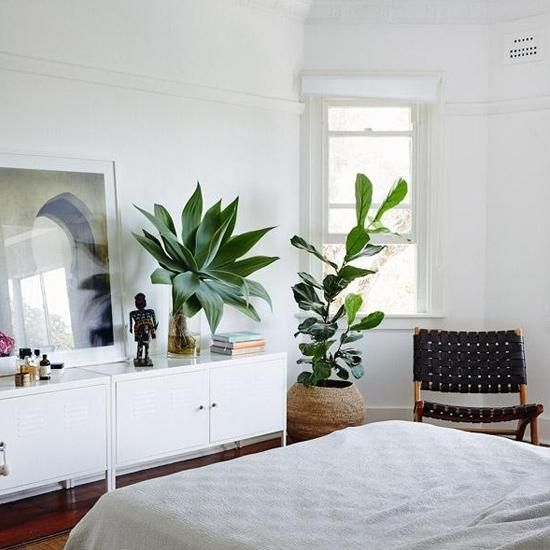 Low Maintenance Modern Interior Decorating with House Plants | Room ...