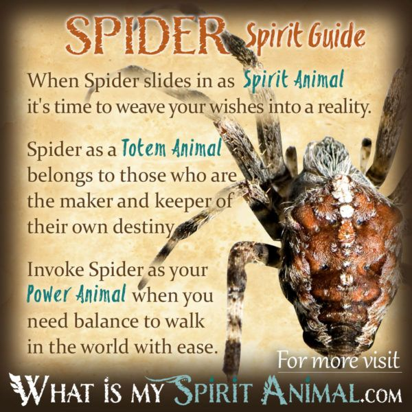 Spider Symbolism Meaning Wicca Pinterest Power Animal