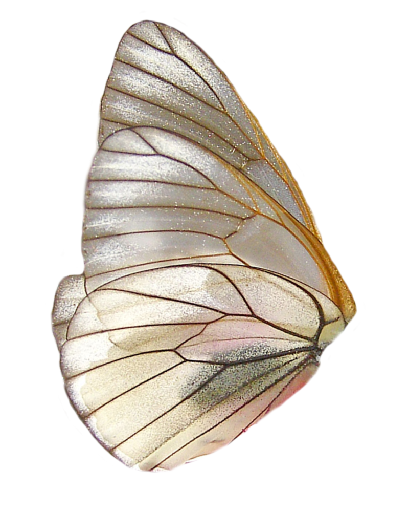 Png Wings By Moonglowlilly On Deviantart Wings Png Butterfly Wings Art