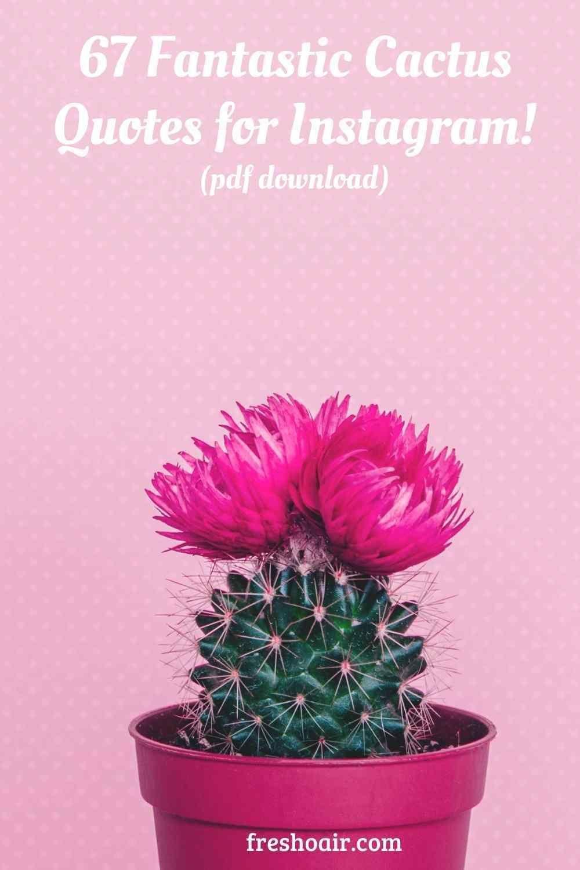 72 Fantastic Cactus Quotes For Instagram Free Pdf Download Freshoair In 2020 Cactus Quotes Cactus Pun Cactus