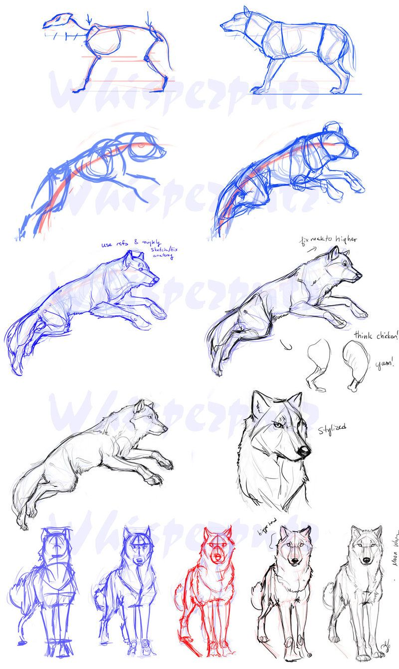 Guides To Drawing Wolves Drawing Pinterest Drawings Animal
