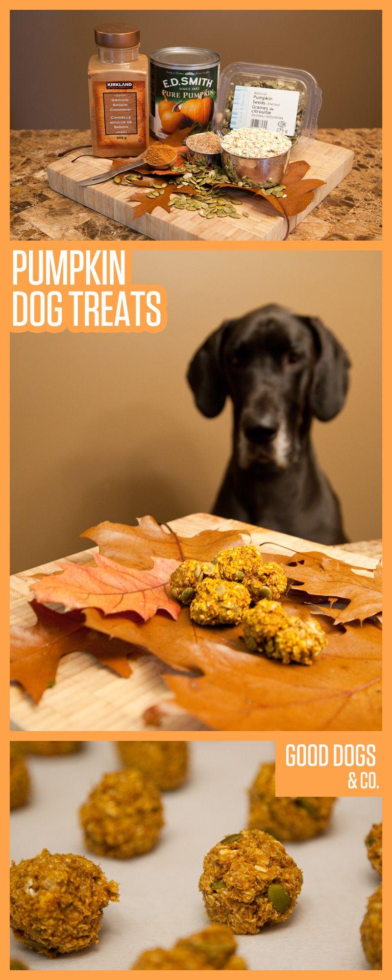 pumpkin dog treats did you know pumpkin puree and pumpkin seeds