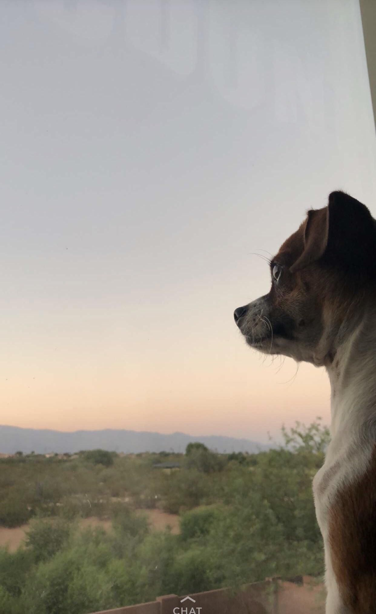 PsBattle: Dog profile with sunset in the background ##reddit