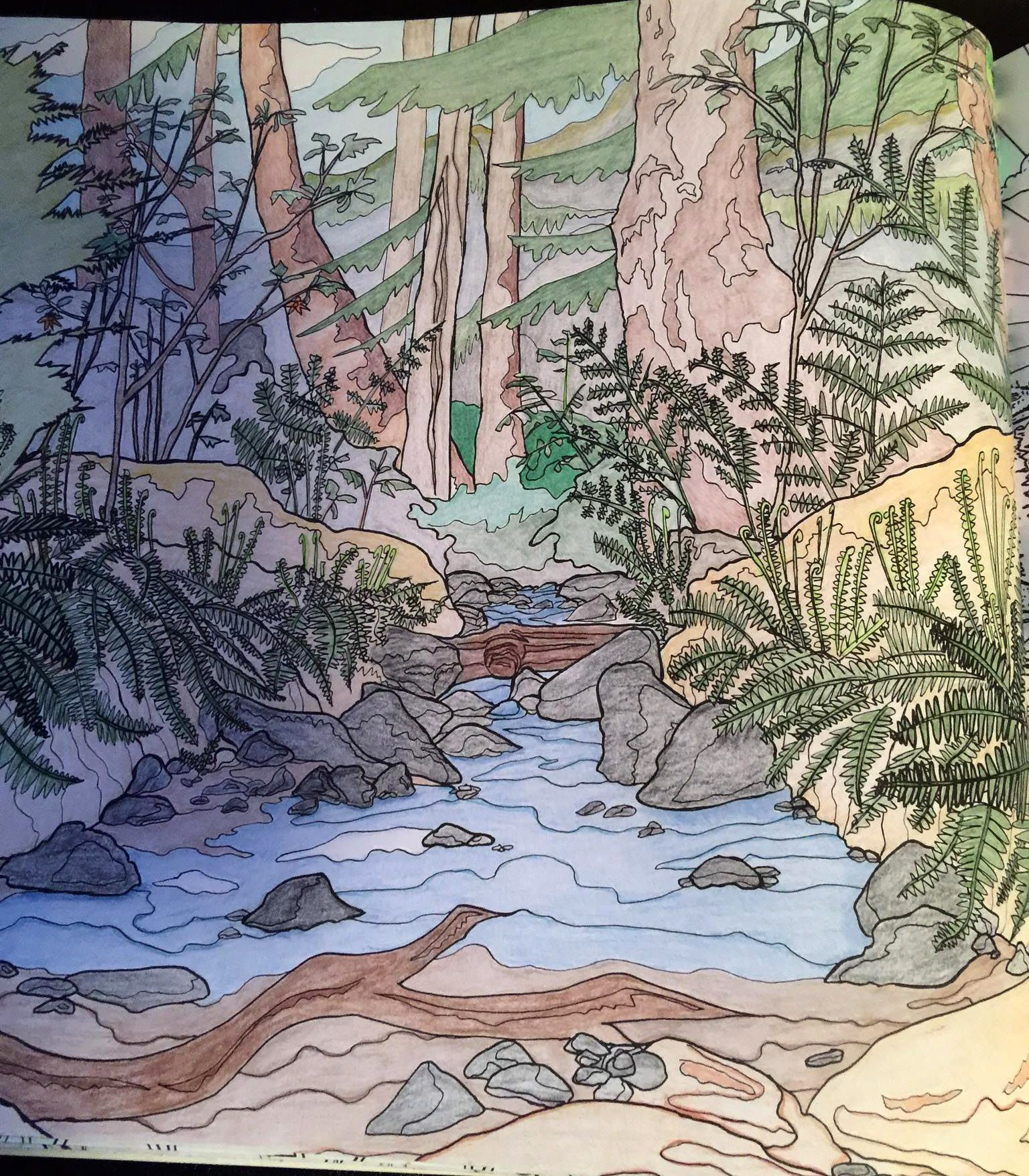 Lynn Headwaters By Joan Jackson