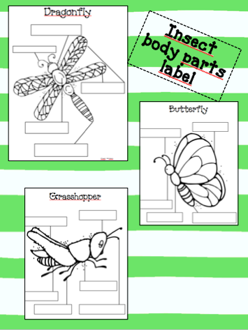 Worksheets Insect Body Parts Worksheet dual lang insect body parts label comes in both english and first grade use as an interactive bulletin board center anatomy worksheets