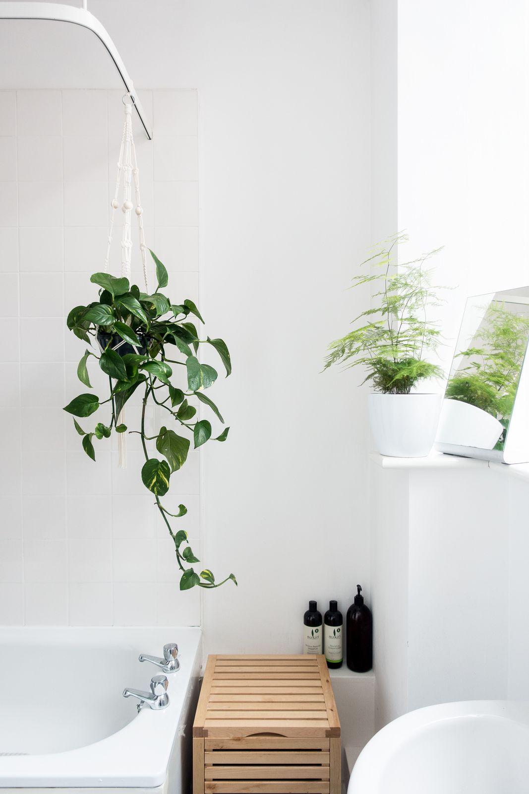 20 Ways To Add Plants In The Bathroom Cuarto De Bano Simple Plantas En El Bano Diseno De Banos Modernos