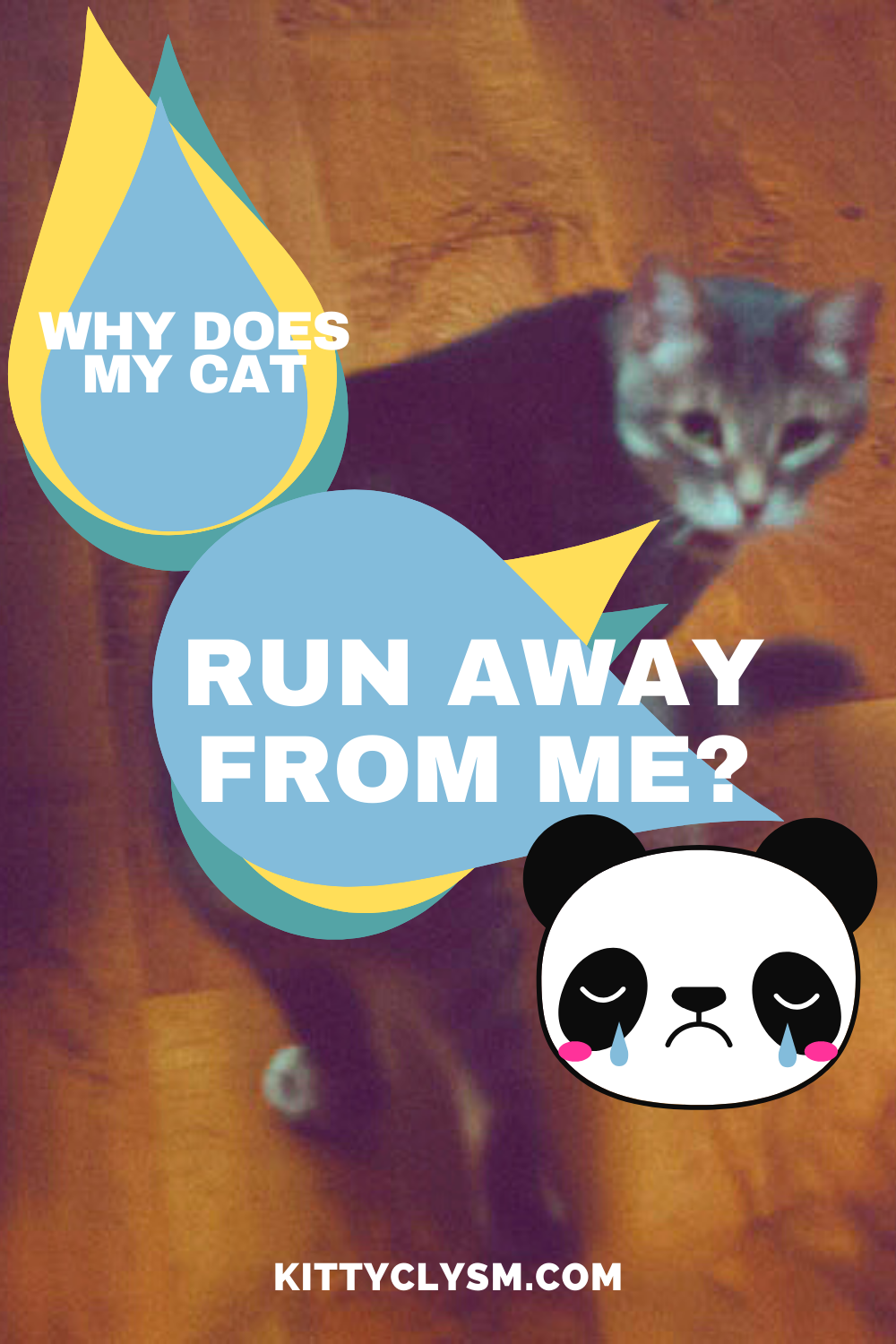 45+ What to do if your cat runs away information