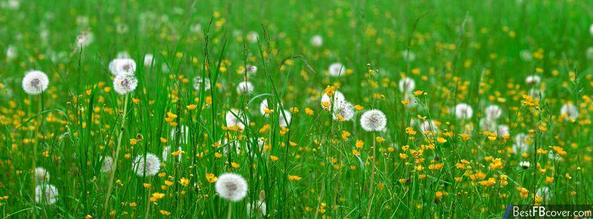 Nature Facebook Photo Cover | Free facebook cover photos