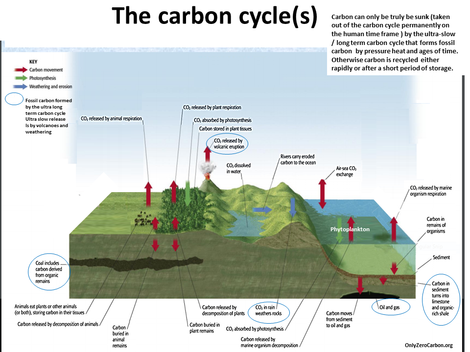Pin By Elisa Felici On School Project Carbon Cycle Essay