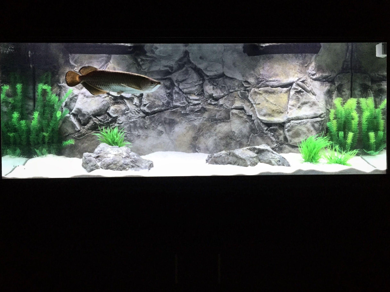 3d Aquarium Backgrounds Fish Tank Decorations Aquadecor Aquarium Backgrounds African Cichlid Aquarium Fish Tank