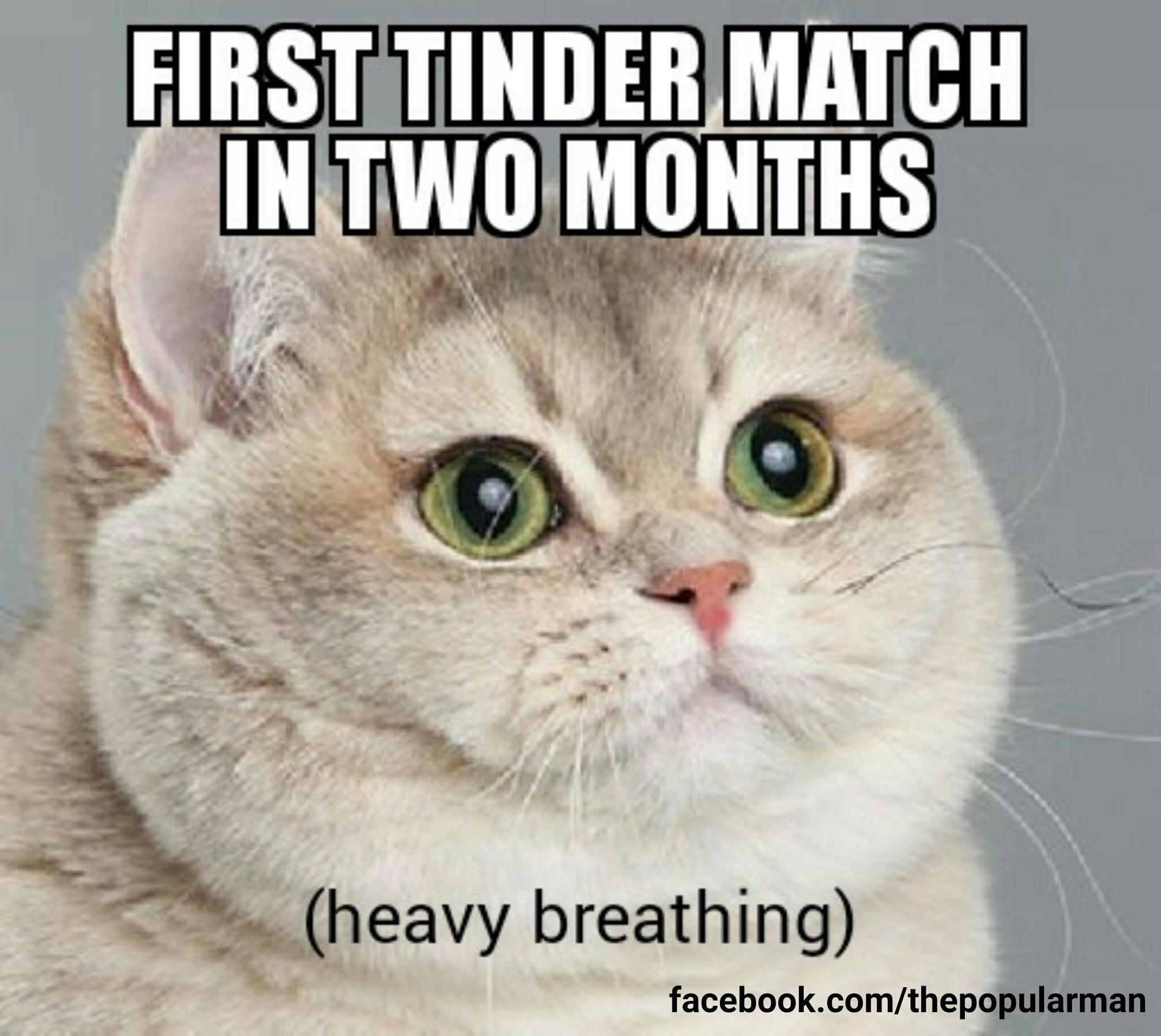 Sick Day Cat Meme