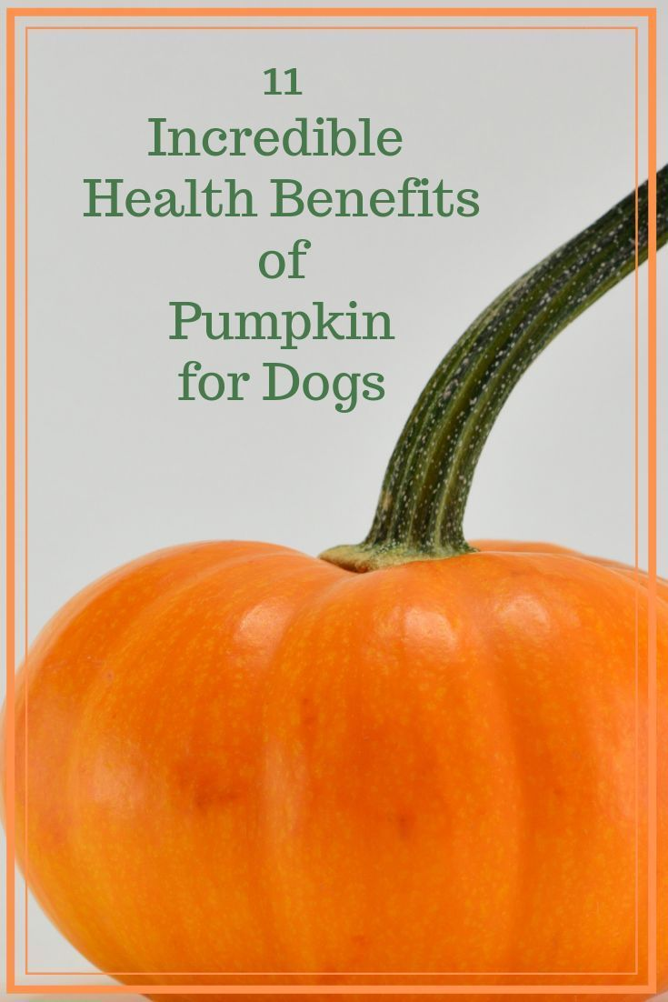 soft food for dogs with upset stomach