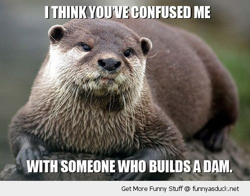What are some otter jokes?
