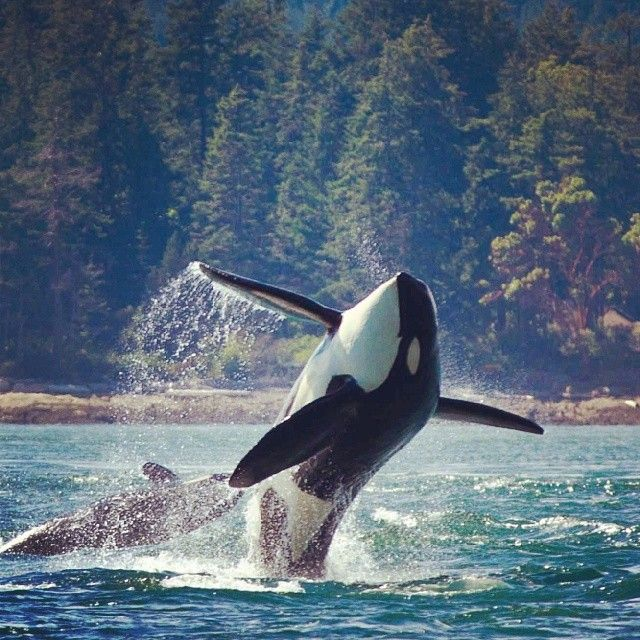 Killer Whale Tours Norway