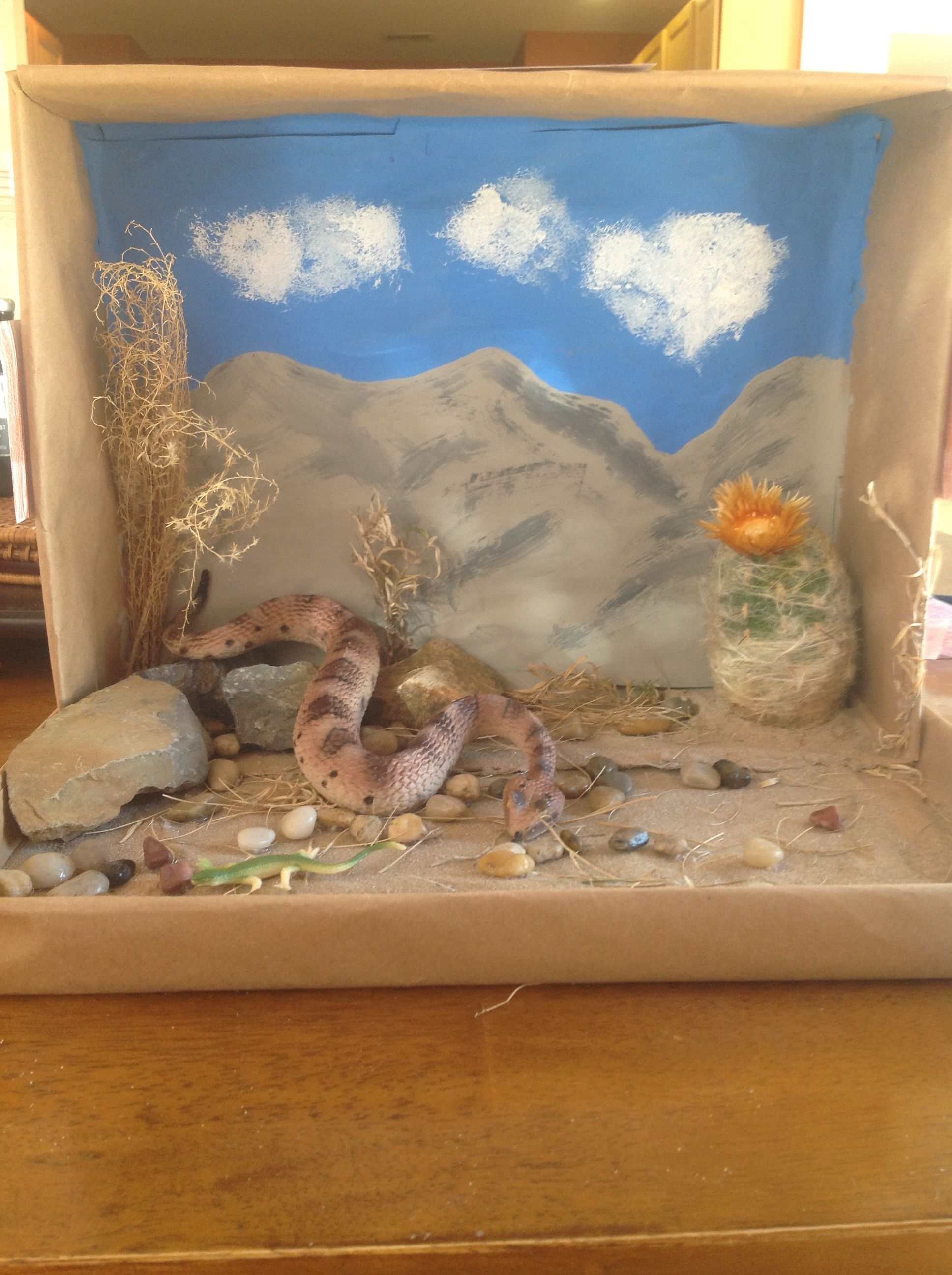 Kids Diorama With Details: Ecosystems Projects