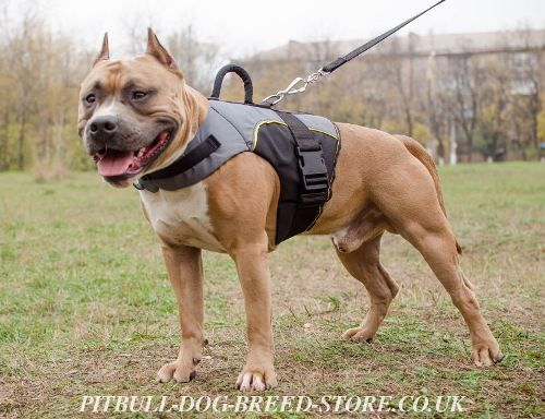 Bestseller Vest Harness For Pitbull Support And Warming