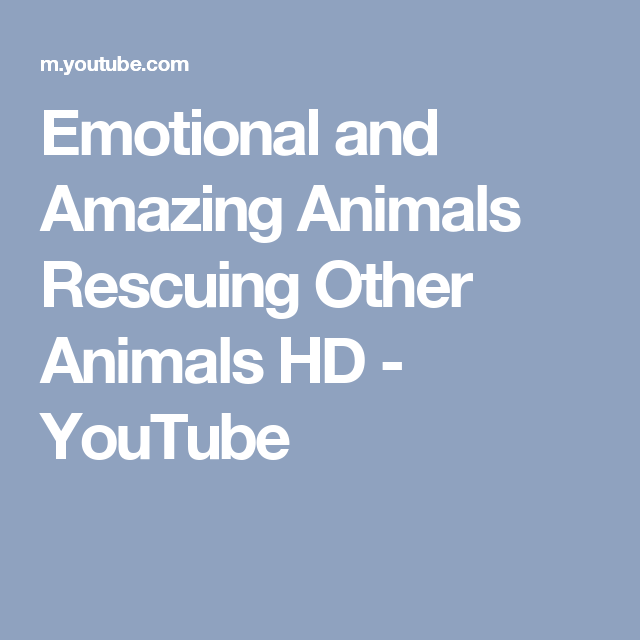 Emotional and Amazing Animals Rescuing Other Animals HD - YouTube
