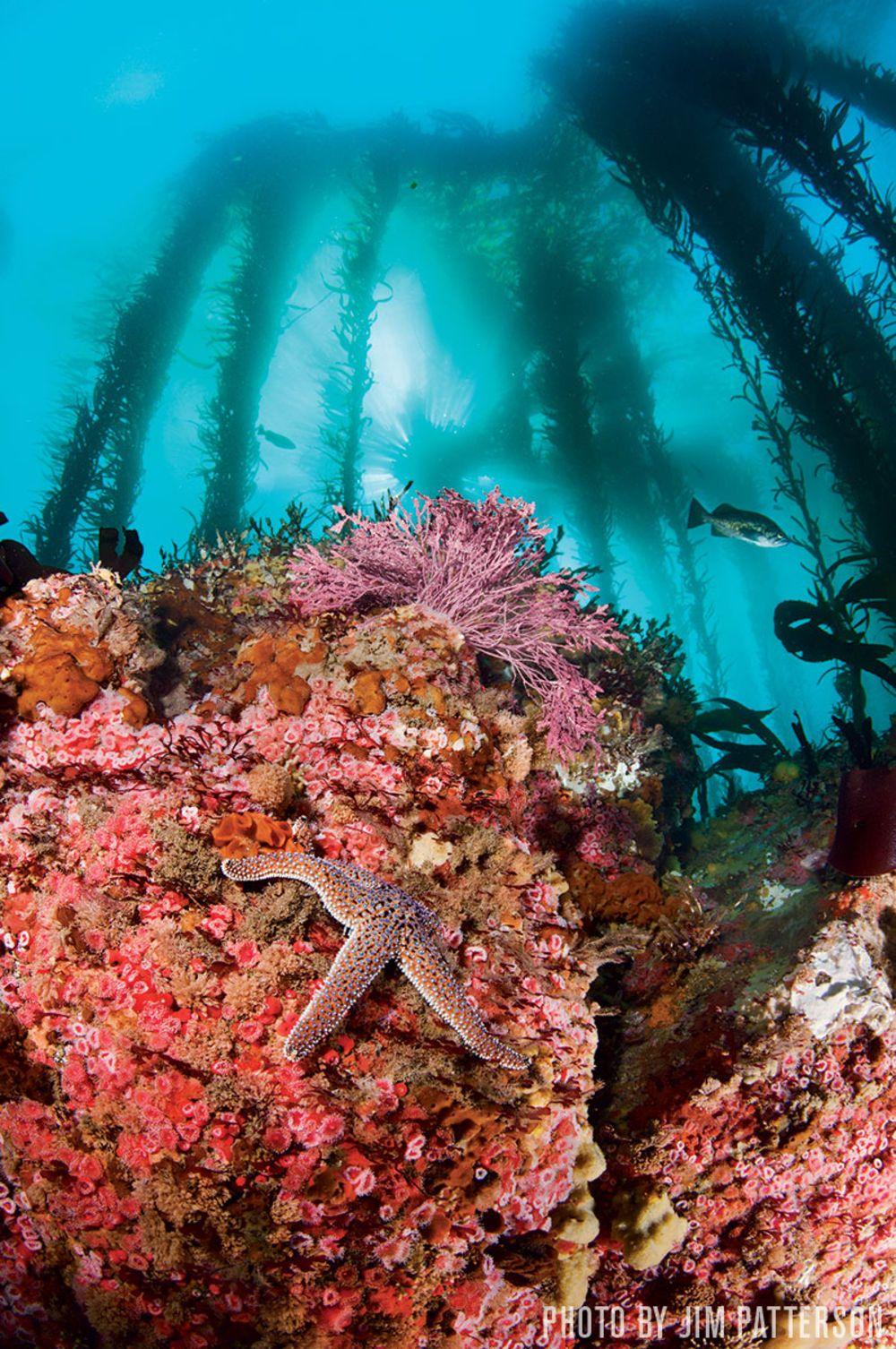 50 Best Dive Sites In The World Adventure Is Out There Diving Best Scuba Diving