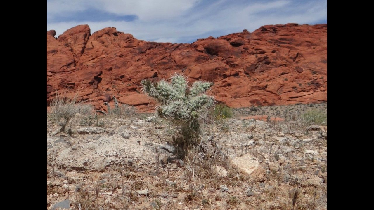 In this Instagram video we used pictures taken at Red Rock Canyon in Las Vegas. Nevada. Highlighting what you may see on your visit to this national park. Sh...