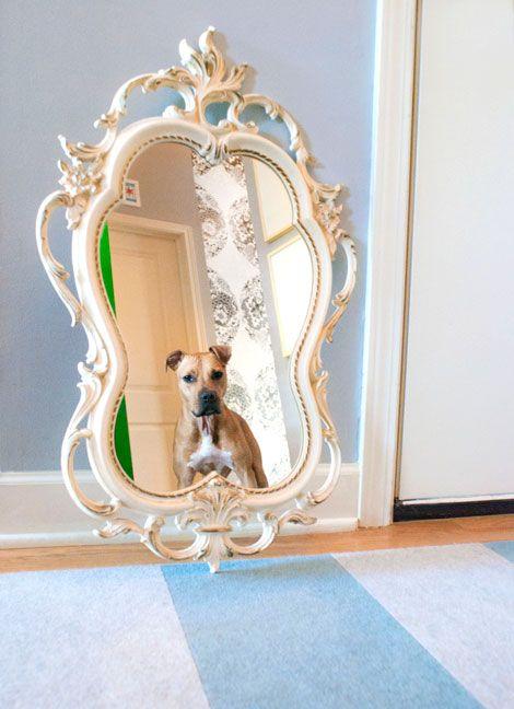 Boxer Puppies For Sale Cincinnati Area