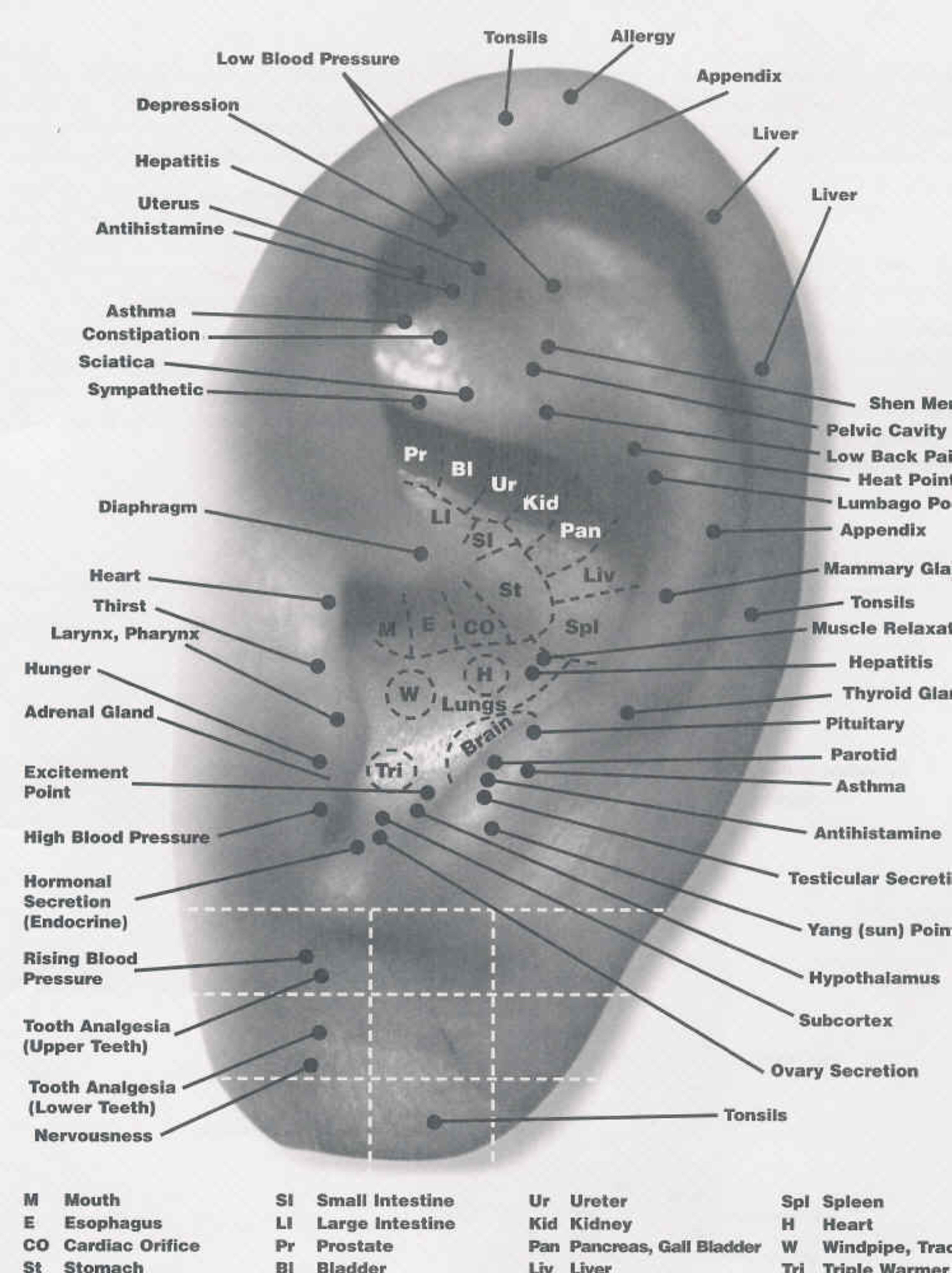 Face Pressure Points Diagram Vectra Stereo Wiring Best Ear Chart I Can Find Auriculoterapia Acupuntura