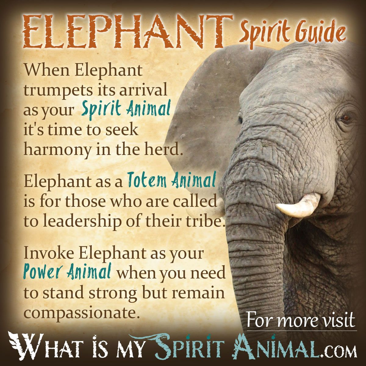 Elephant Symbolism Meaning Elephants Pinterest Power Animal