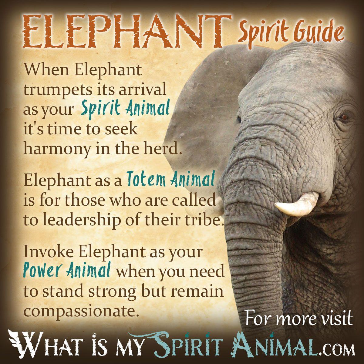 Elephant Symbolism &am...
