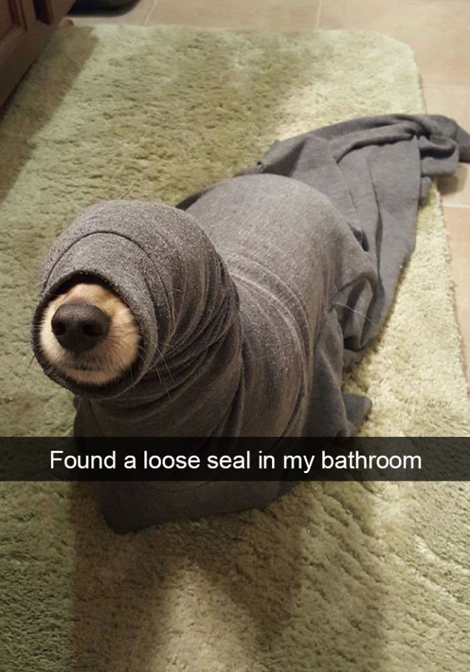 The 29 Funniest Dog Snapchats of All Time | Blaze Press