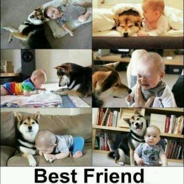 Awww So True Best Friends Baby Dogs Funny Animals