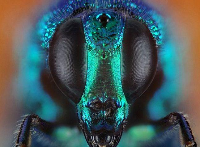 Cliques impressionantes revelam os rostos imperceptíveis dos insetos http://r7.com/ExNT