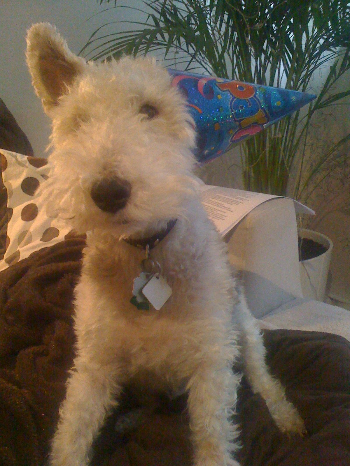 Party Fox Terrier
