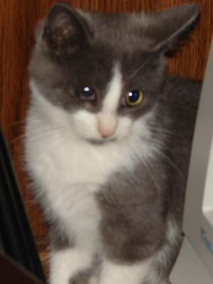 Meet Cadance A Petfinder Adoptable Domestic Short Hair Cat Melbourne Fl You Can Fill Out An Adoption Application Online On Our Pet Adoption Cats Fur Kids