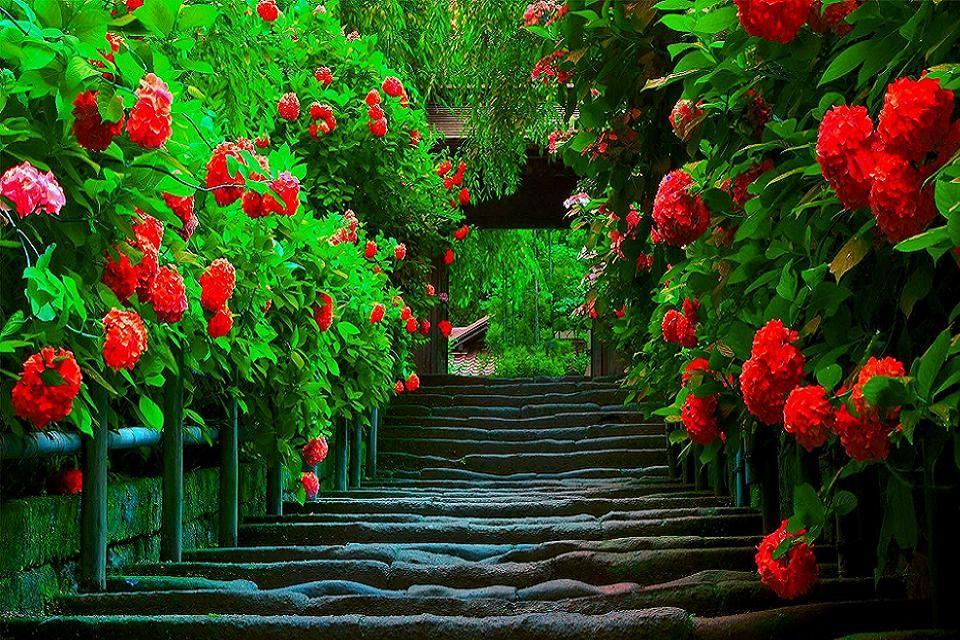 Wallpaper Nature 3d Download Pc