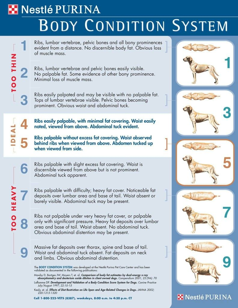 10 vital tips for preventing obesity in your dog dog food 10 vital tips for preventing obesity in your dog dog weightweight chartspet geenschuldenfo Gallery
