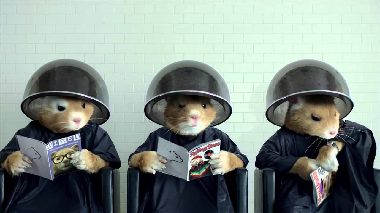 2014 Kia Soul Hamster Commercial Lady Gaga Applause Official Song