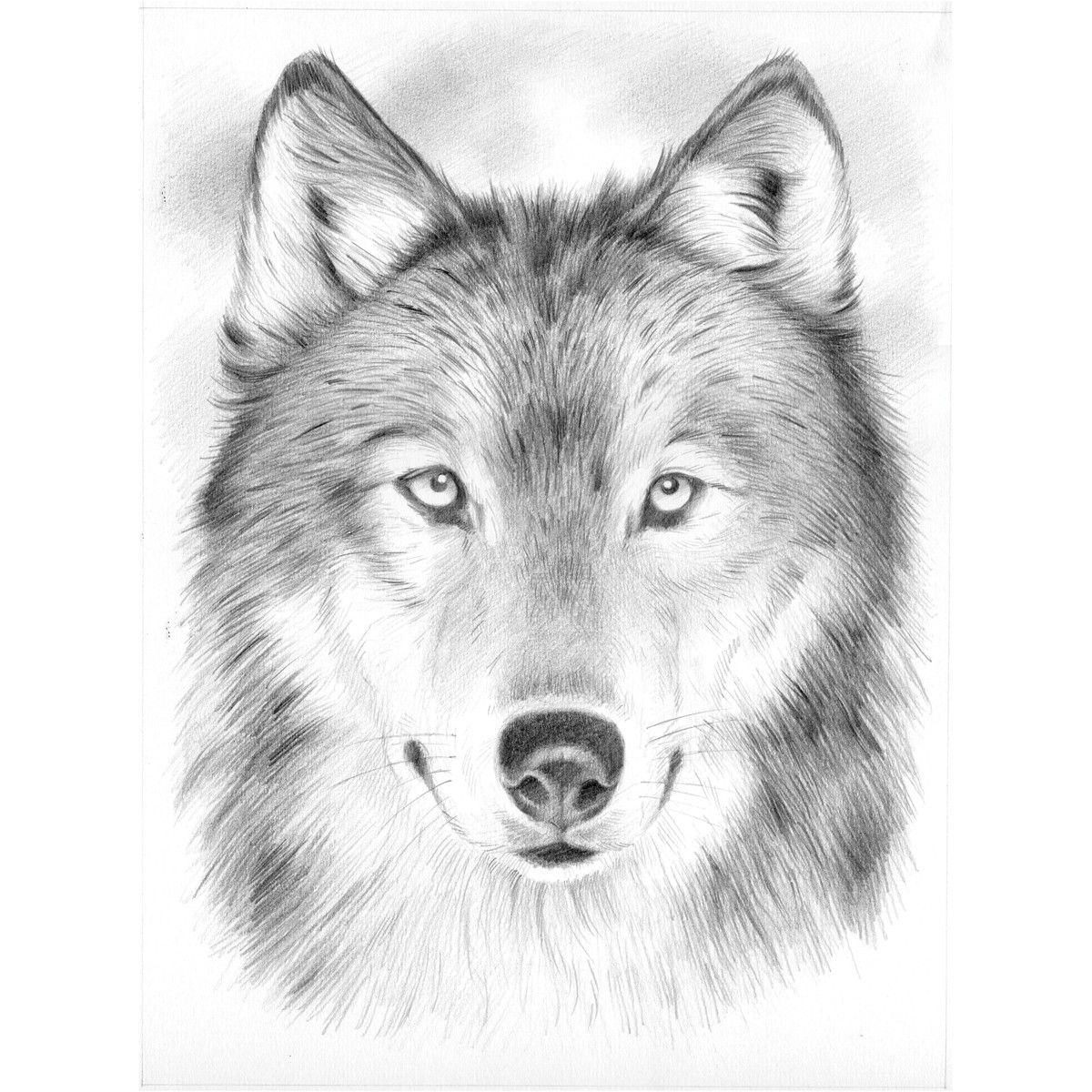 Line Drawing Wolf Face : Wolf line drawing images google search wolves and