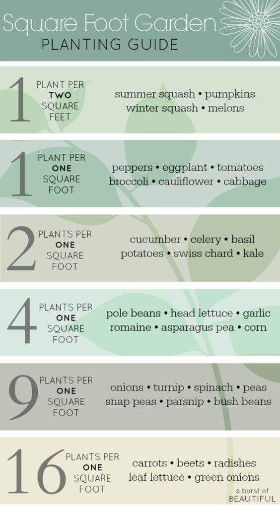 Our Beginner Gardening Tips / Raised Garden Bed Tips | A Hosting Home