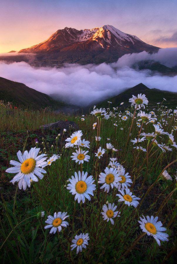 Helens #landscapephoto