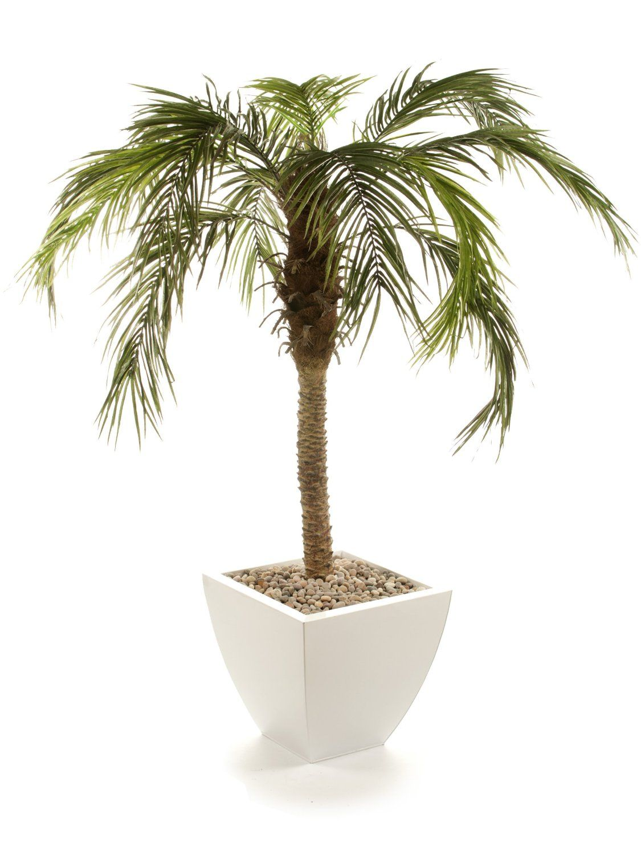 Closer To Nature 5ft Areca Palm Tree: Amazon.co.uk: Garden &