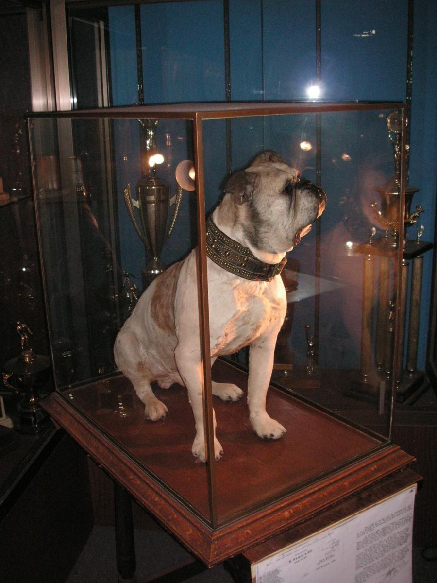 Handsome Dan I Yale Bulldogs English Bulldog Funny Bulldog