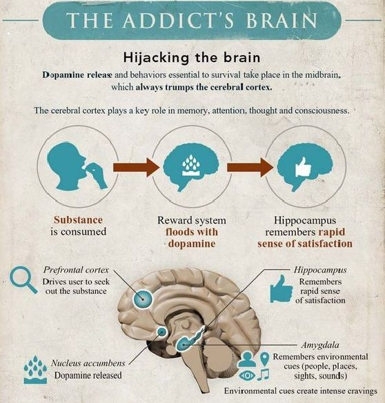 Pin by Jenny Toufas on Medicine~Science