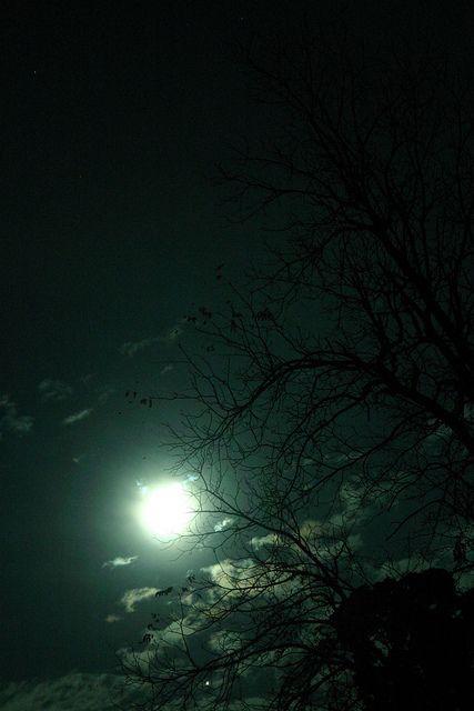 Noite é da lua