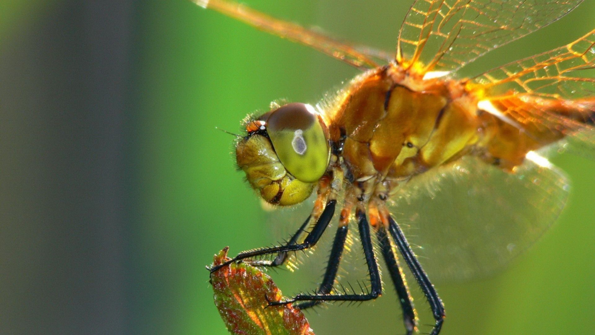 DRAGONFLY........SOURCE BING IMAGES.........The dragonfly