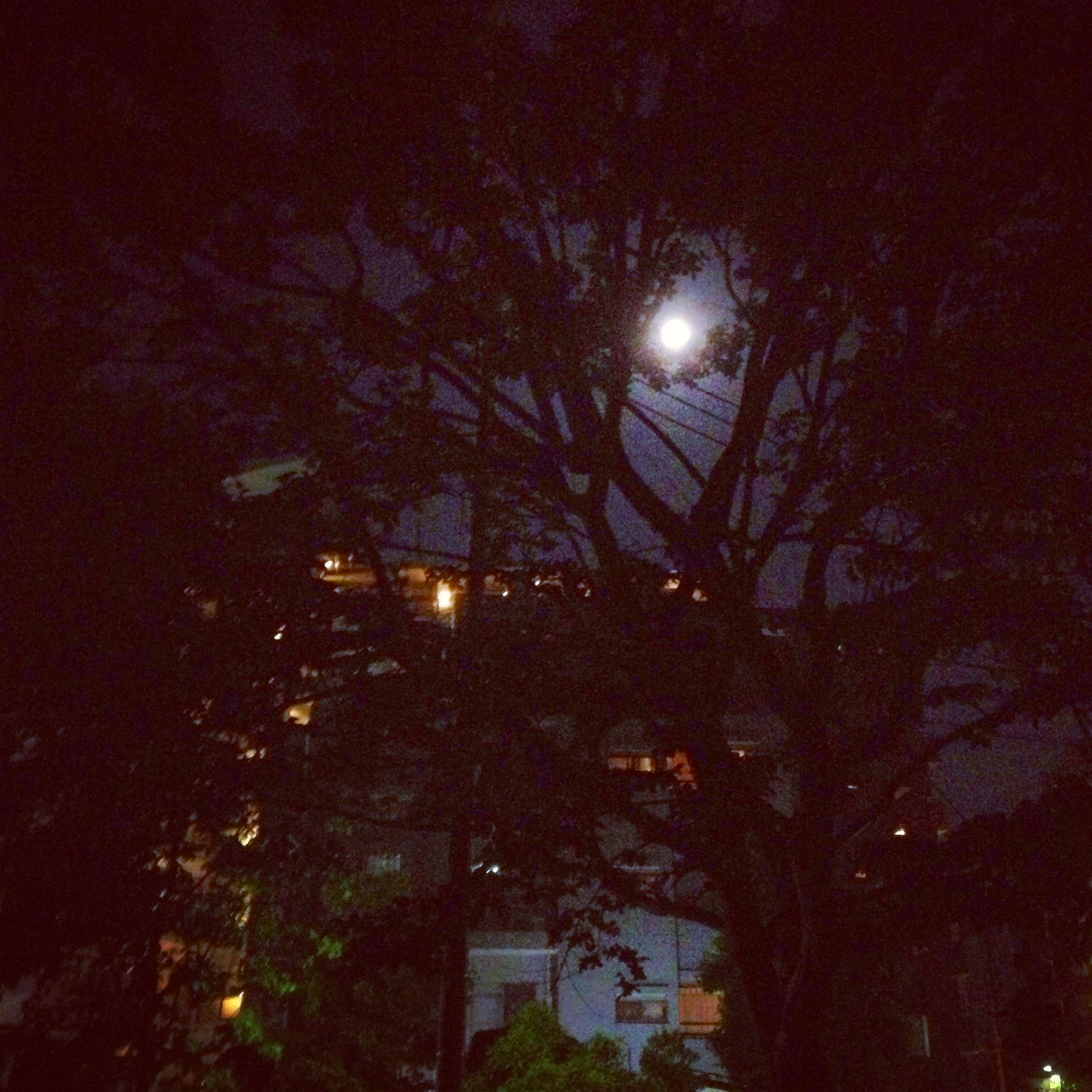 Bright moon. Swaying trees. Warmth. Beauty. Love