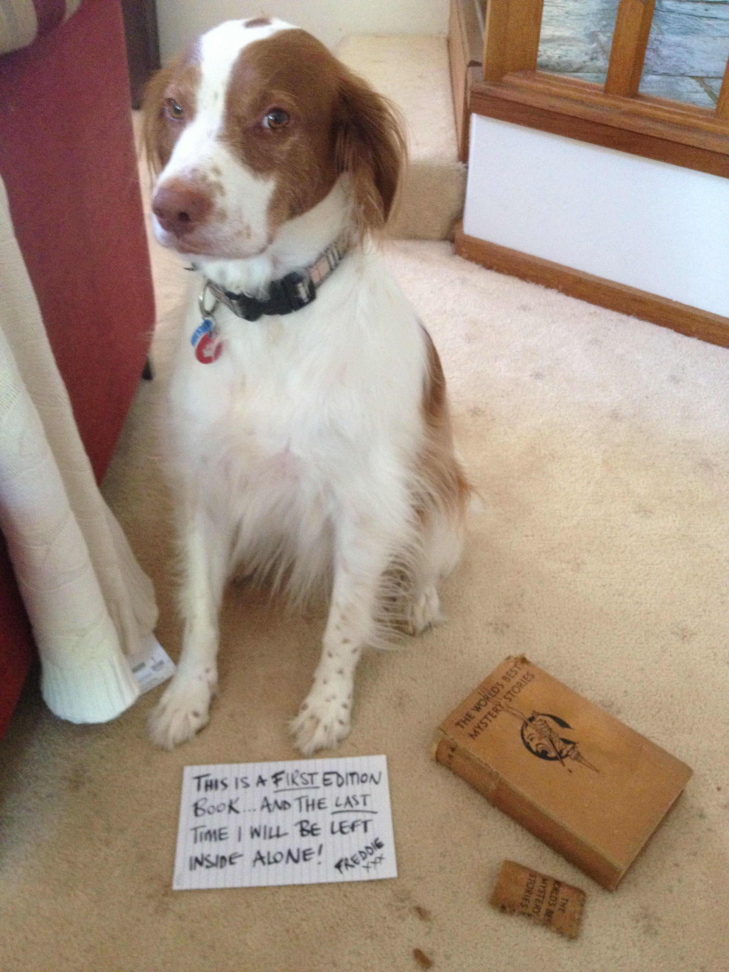 Dog training tips for a wellbehaved furry friend continue with