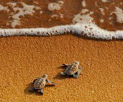 BABY TURTLES!!!