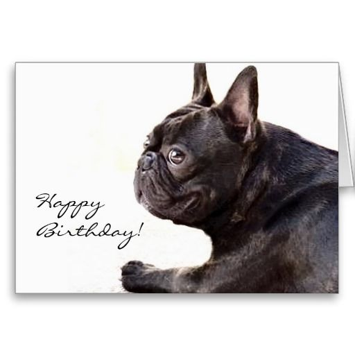 Happy Birthday French Bulldog Card Zazzle Com Happy Birthday