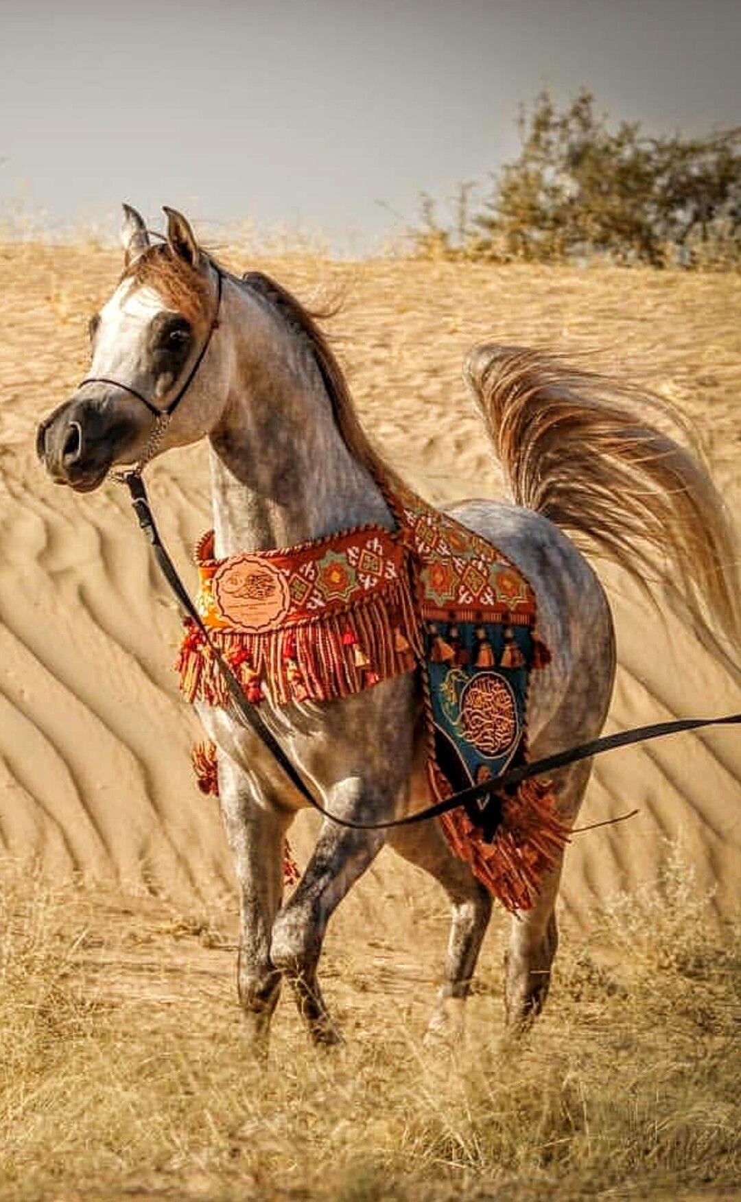 Arabian Horse Horses Arabic Horse Cute Horses