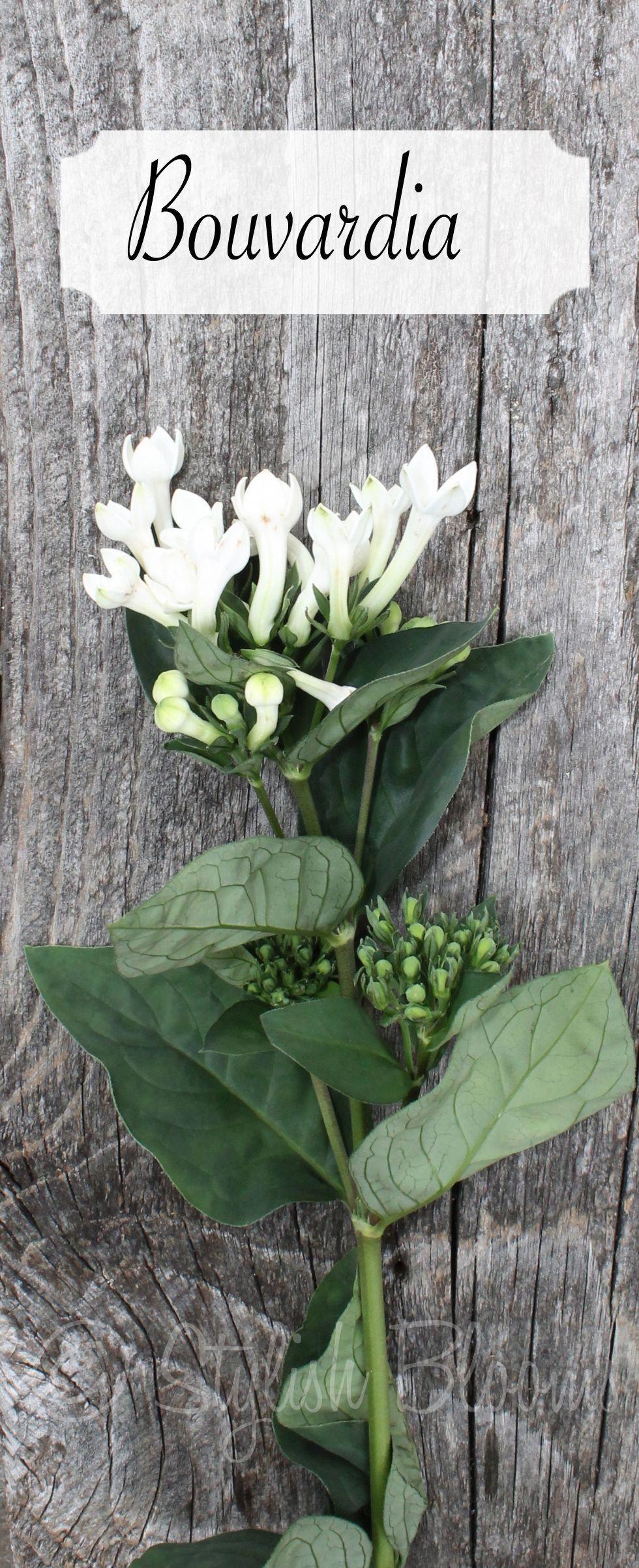 White Bouvardia Bouvardia Symbolizes Enthusiasm It Is Also Used To Indicate Zest For L Flower Bouquet Wedding Beach Wedding Flowers Tropical Wedding Flowers