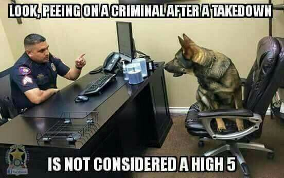 Funny Meme For Cops : Whats your funniest police police phrasejoke or story run by cops